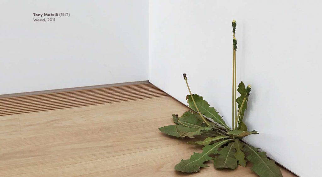 Weed van Tony Matelli in Museum Voorlinden